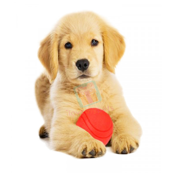 Happy Pet Fetch Rubber Ball Large