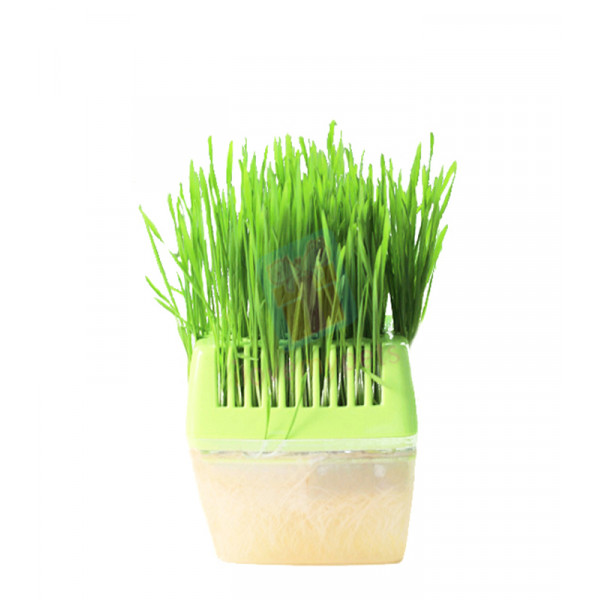 Petstyle Cat Grass Kit